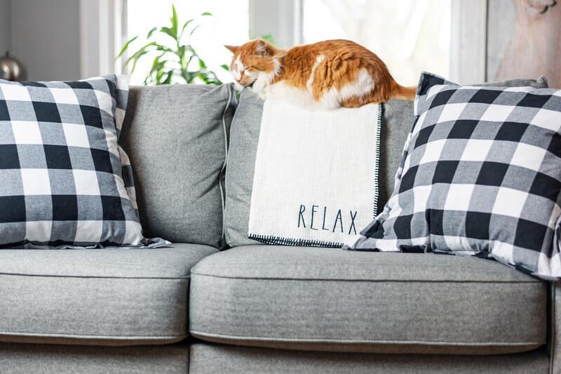 Title Decor.sofa Cat.dreamstime S 150357227