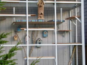 Catio Cat Enclosure Birdhouse Cats Exterior Decorcatiospaces