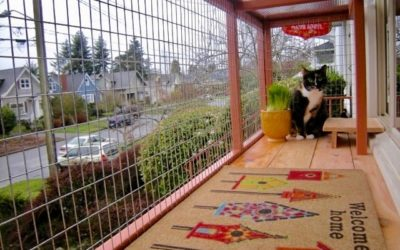 DIY Catio Materials: How to Pick the Right Cat Enclosure Mesh for Your Catio