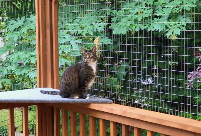 cat in catio with wire mesh