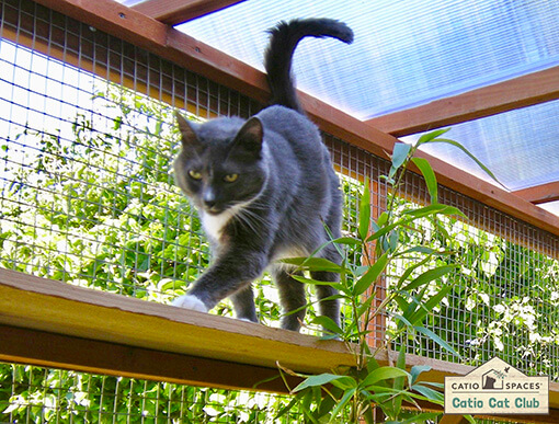 Catio Cat Club Bandit Cochran Catiospaces