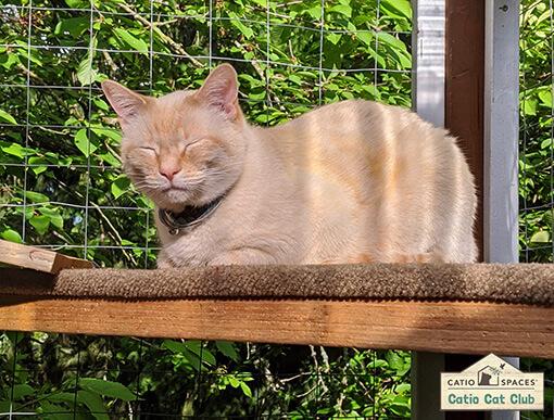 Catio Cat Club Marshmellow Trey Catiospaces Copy