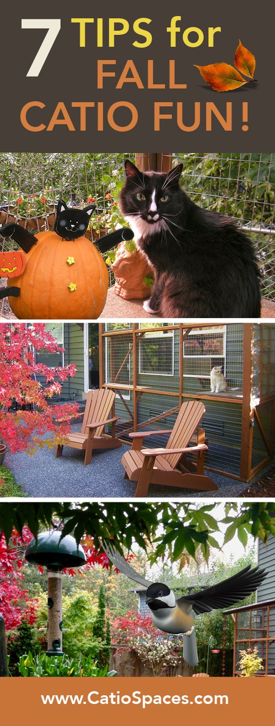Don't iss these quick fall tips for keeping your catio fall-friendly and fun!