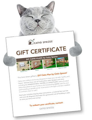 cat sleeping catio gift certificates