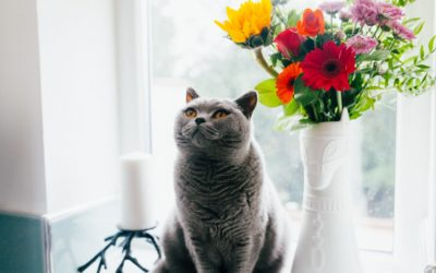 7 Ways to Enrich the Life of Your Cat in the New Year