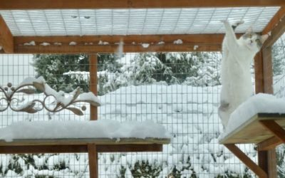 Cat-Friendly Holiday and Winter Decor For Your Catio