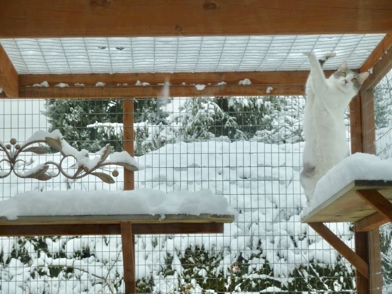 Catio Cat Enclosure Cat Paw Snow Catiospaces[599]