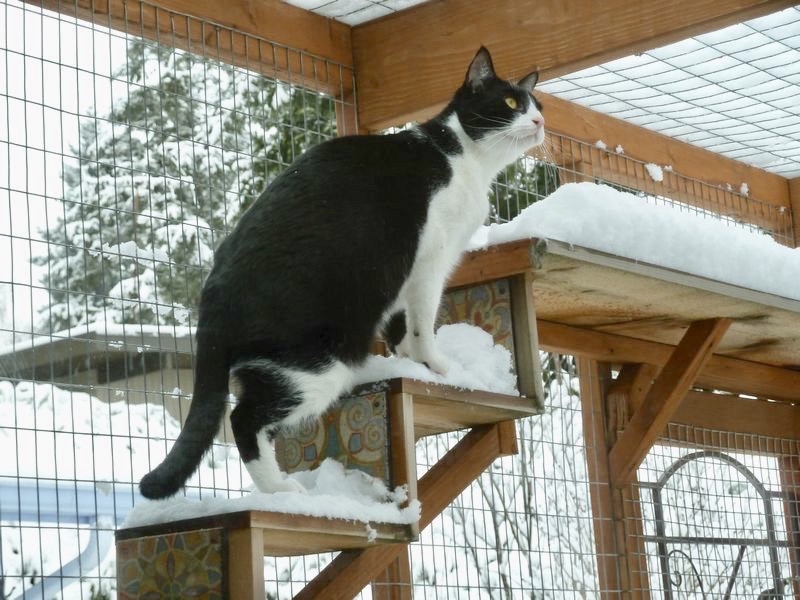 Catio Cat Enclosure Cat Snow Steps Catiospaces[597]
