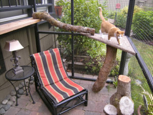 Catio Cat Enclosure Interior Sanctuary Catiospaces
