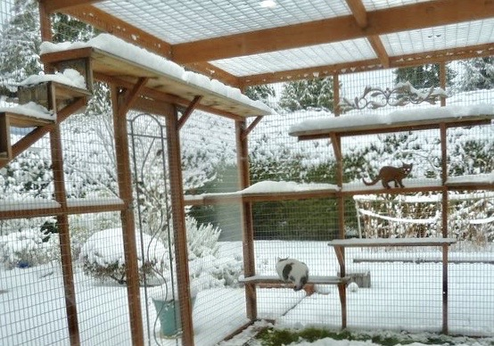 Catio Cat Enclosure Interior Wide Snow Catiospaces[602]