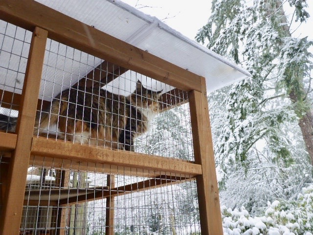 Catio Cat Enclosure Snow Poly Roof Catiospaces[598]