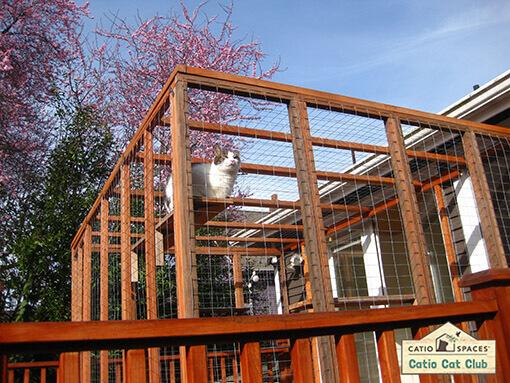 Tom Catio Cat Enclosure Deck Club Catiospaces