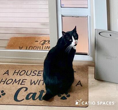 Cat Door Catio Measure Black Cat Catiospaces Img 3332 Lm Wm