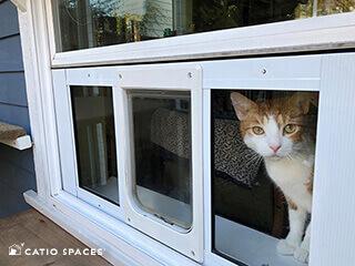 Cat Door Catio Sash Window Catiospaces 320wm