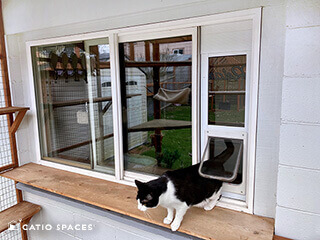 Cat Door Catio Slider Window Catiospaces 320wm