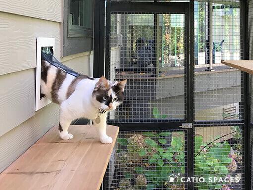 Cat Door Catio Title Catiospaces Img 0753 2 Wm 510w