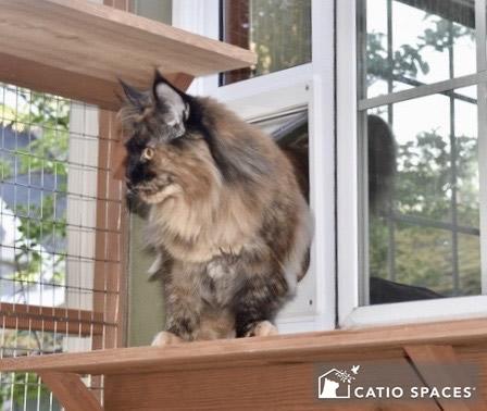 Cat Door Patio Catio Catiospaces Cat Door Window