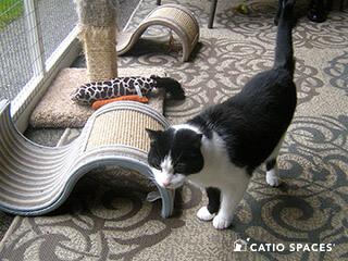 Catio Cat Enclosure Cat Scratch Catiospaces 320 Wm