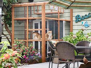 Catio Cat Enclosure Exterior Louie Sampson Catiospaces 320 Wm