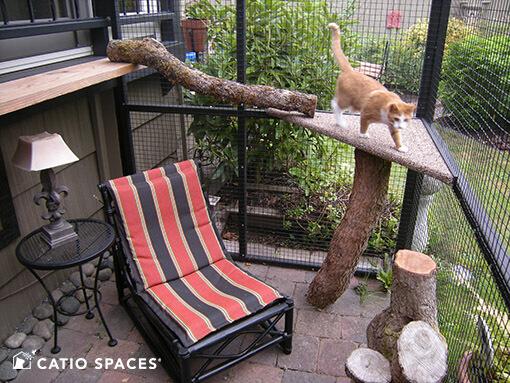 Catio Cat Enclosure Interior Serena Sanctuary Black Catiospaces 510 Wm