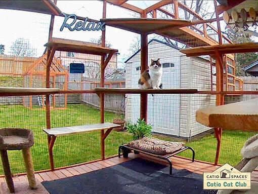 Cookie Catio Cat Enclosure Interior Club Catiospaces