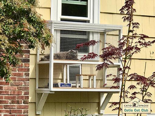 Shadow Catio Cat Enclosure Club Catiospaces