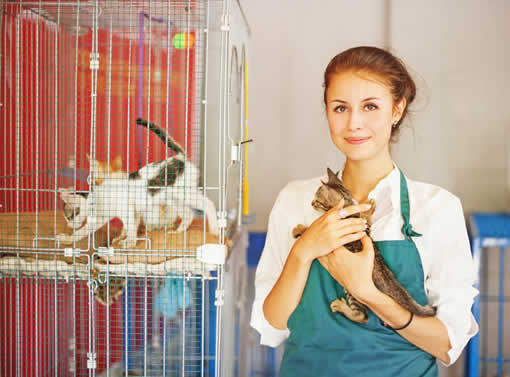 catiospaces animal welfare organization