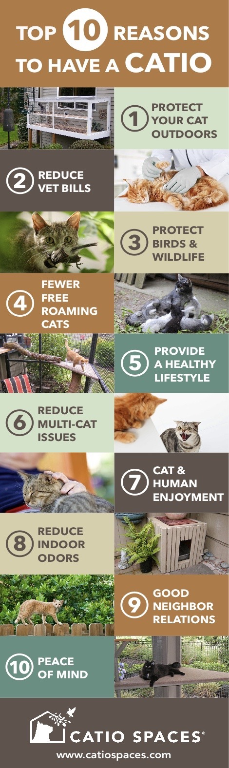 Catio Spaces Catio Top10 Benefits
