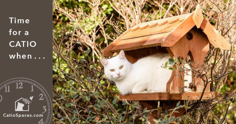 Catio Cat Enclosure Time Birdhouse Catiospaces