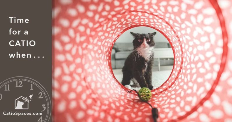 Catio Cat Enclosure Time Red Tunnel Catiospaces