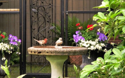 Love Cats, Birds and Gardens? Here's How to Create a Bird-Safe Garden