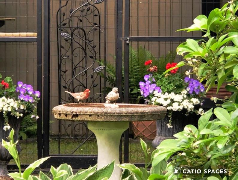 Bird On Birdbath Catio Spaces