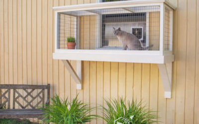 Is It Easy To Build A Window Box Enclosure for My Cat?