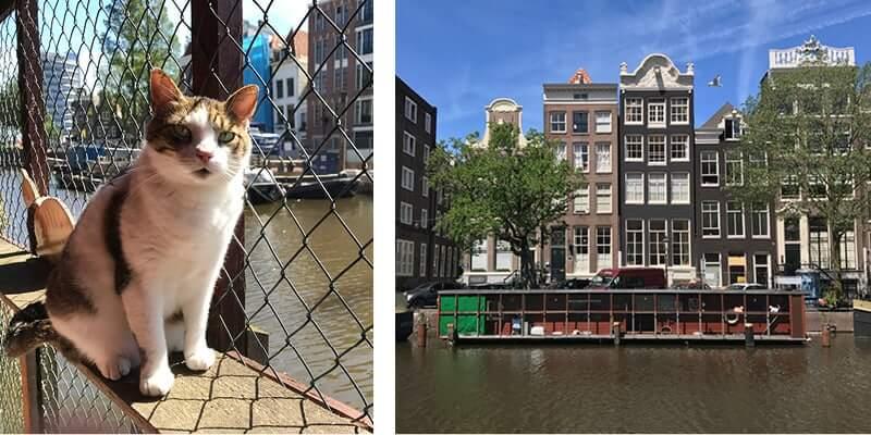 Amsterdam Shelter