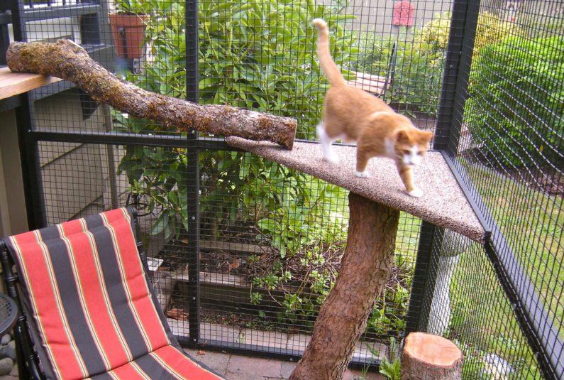 Catio Cat Enclosure