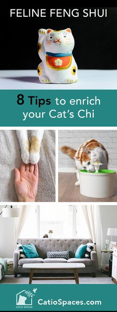 Does your home have good feng shui for your cat? Check out these 8 tips for creating positive energy for your favorite felines, indoors and out. #fengshui #catenrichment #catio #catenclosure #catpatio #homedesign #interiordesign #cathealth #catsafety #harmonioushome #felinefengshui #catprojects #cat #diycatio #diycatenclosure #diycatpatio #buildacatio #buildcatenclosure