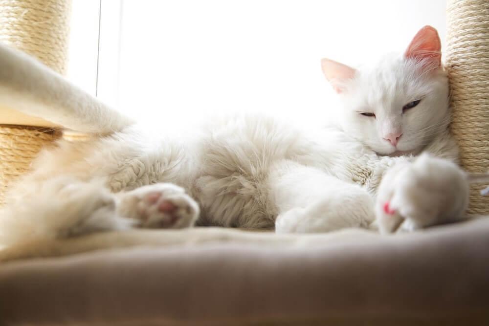 White Cat Relax