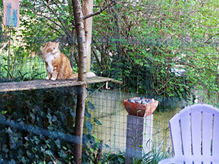 320.catio Cat Enclosure Catio Tour Directory Seattle Fauntleroy 320.catiospaces