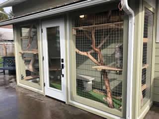 Catio Cat Enclosure Sage Green Color Catiospaces