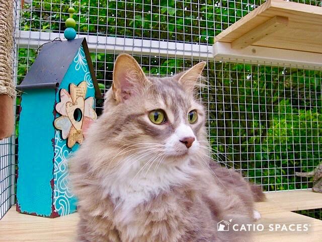 Catio Cat Enclosure Birdhouse Cat Interior Catiospaces Wm