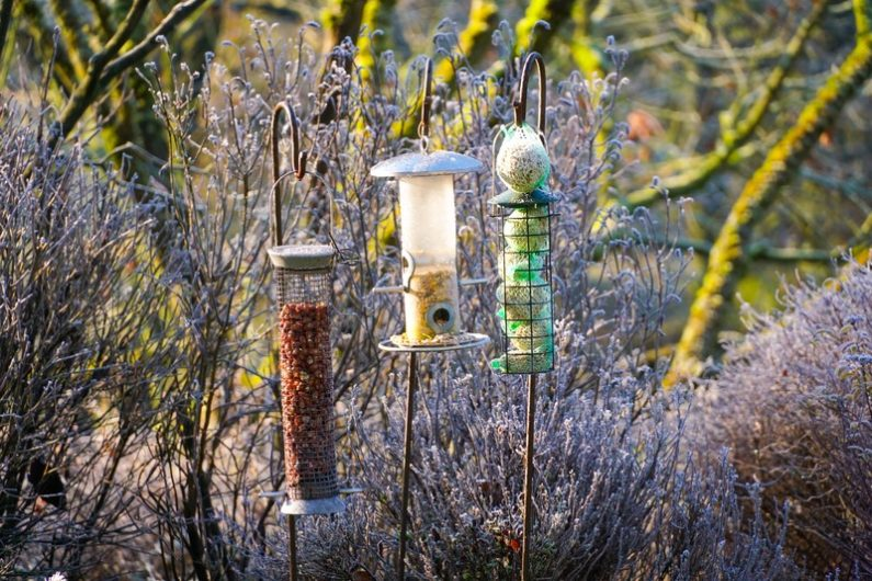 Bird Seed Variety