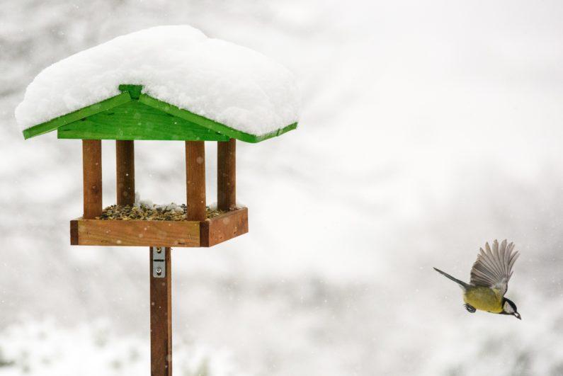 Snow Birdfeeder