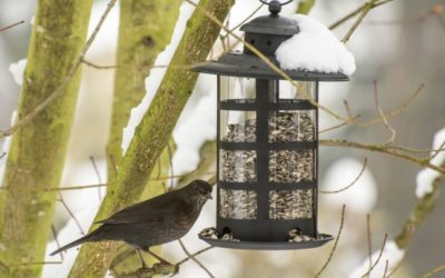 Catio Spaces' Guide to Winter Bird Feeders