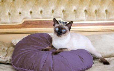 Cat Royalty: Give Your Cat the Royal Treatment in the New Year (and Every Day!)