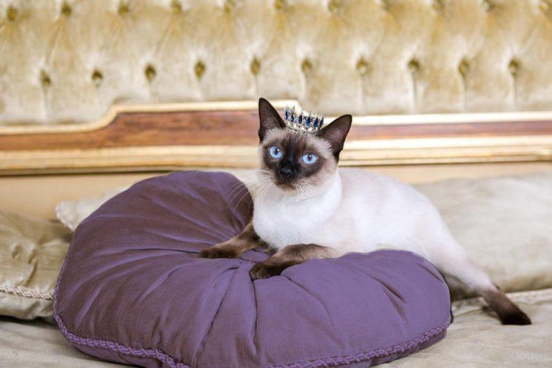 Purple Princess Cat