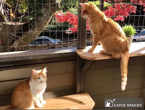 Catio Cat Enclosure Deck Catio Catiospaces