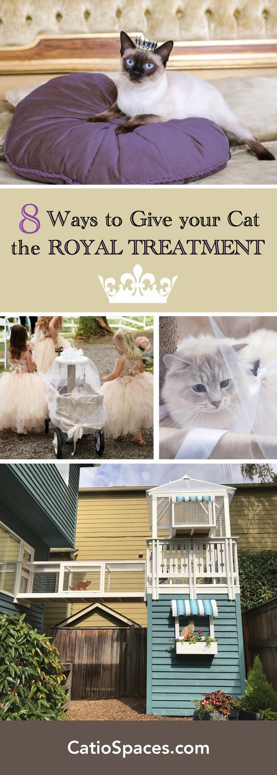 Throughout history, cats have been worshipped, treated like royalty and commanded our attention. Discover 8 ways to pamper your own cat. #catroyalty #catenrichment #catwedding #catio #catenclosure #catpatio #diycatio #diycatenclosure #diycatpatio #buildacatio #buildcatenclosure #buildcatpatio #catprojects #catdiyprojects