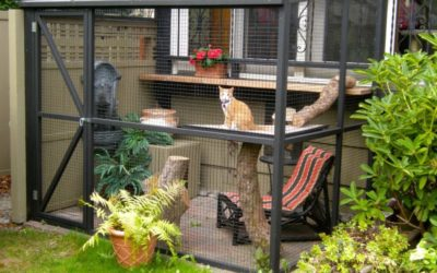 Catio Transformations: See These Before and After Photos!