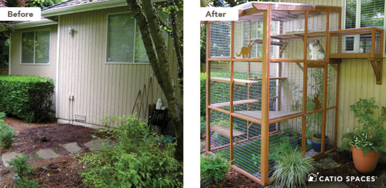 Catio Cat Enclosure Before After Beard Haven