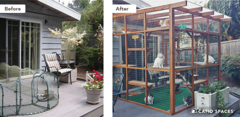 Catio Cat Enclosure Before After Smith Deck